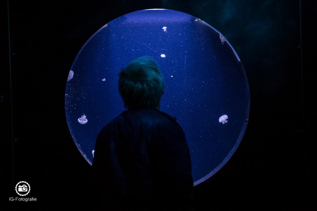 Aquarium-Berlin-2