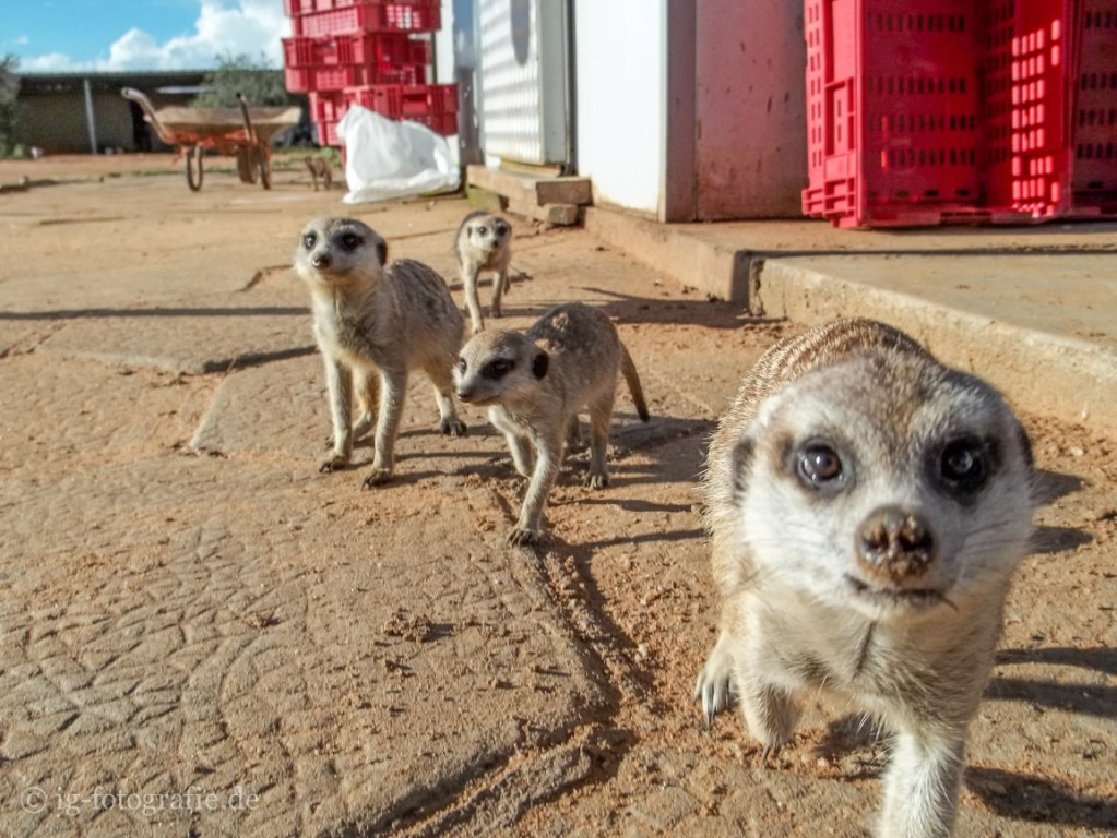 Wildlife-Volunteering-Namibia-11