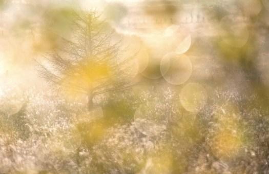 naturfotografie-praxisbuch-2