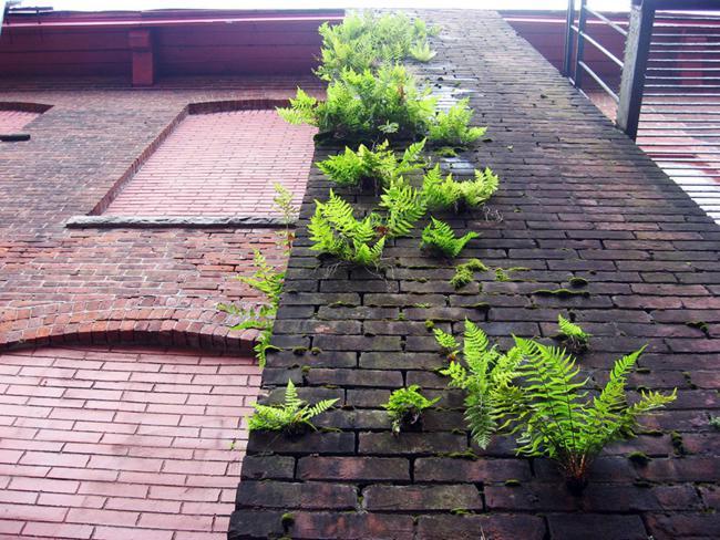 flower-tree-growing-concrete-pavement-27