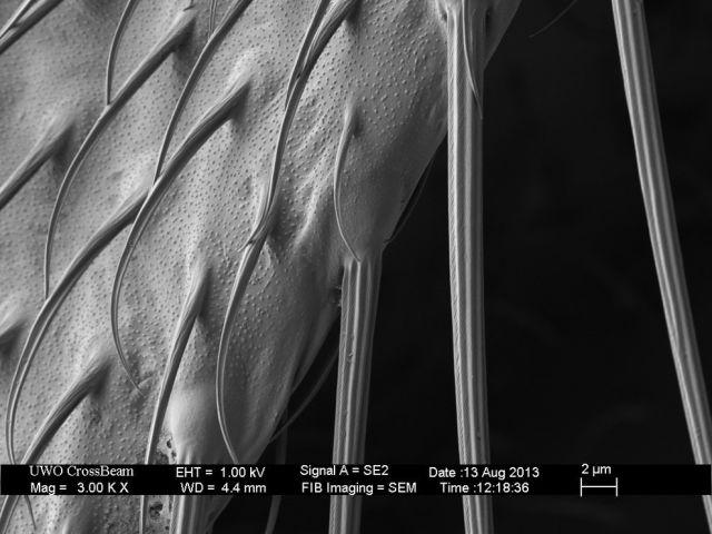 microscopio_imagens_19