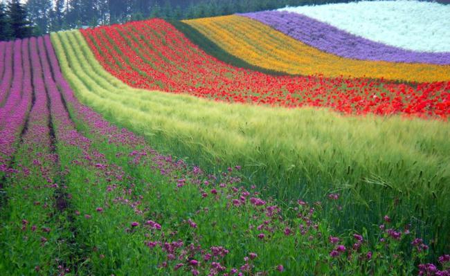 paisagens_coloridas_21