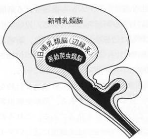 脳三位一体