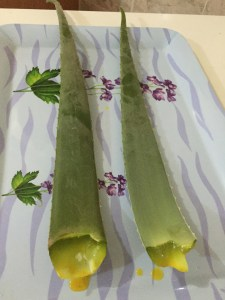 img_0040 How to use FRESH Aloe Vera for Natural Hair