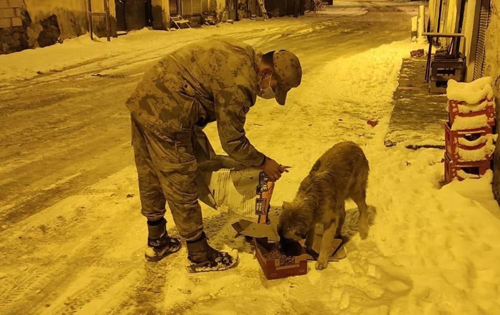 Jandarma sokak hayvanları için doğaya yem bıraktı