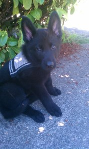 A picture of XeeLo guide dog