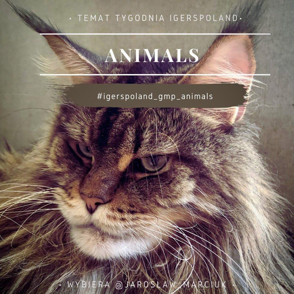 zdjęcia zwierząt na Isntagramie fotografia mobilna koty