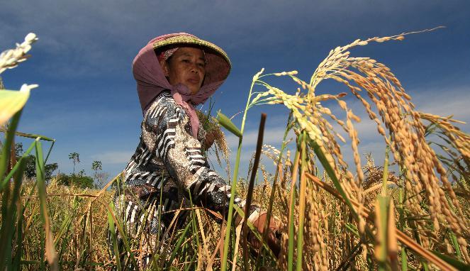 Petani Tak Perlu Sewa Lahan Pemerintah untuk Pertanian