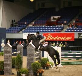 IGK Equestrian, Dressage footing, jumping footing, TruStride™, LiteStride™, Dust free horse arena footing