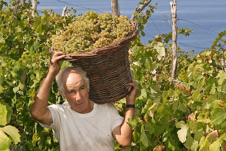 harvest_basket