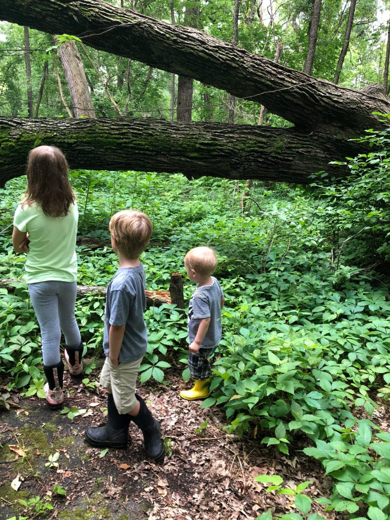 Free Forest School adventures, June 2018