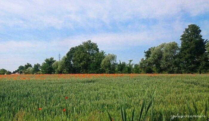 Campo coltivato dell'azienda agricola Gatti di Zelarino