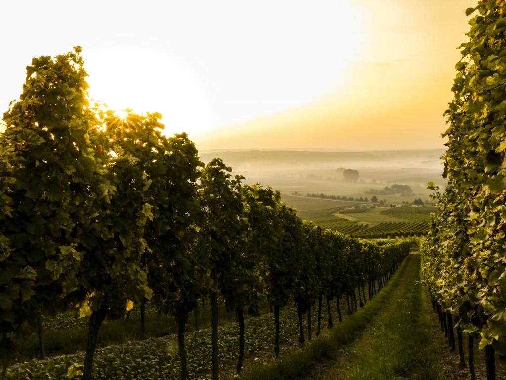 I vini della Franciacorta: visita alla cantina Contadi Castaldi