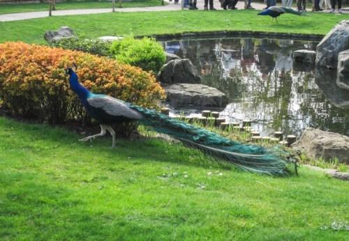 Kyoto Garden a Holland Park