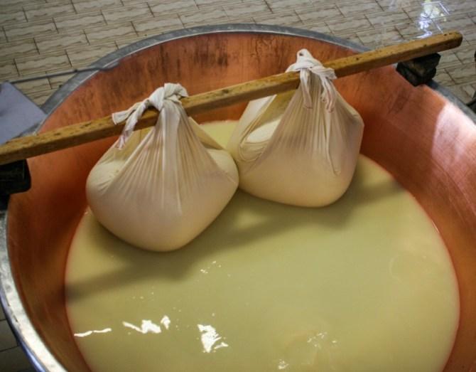 Masse di cagliata, produzione di Parmigiano Reggiano
