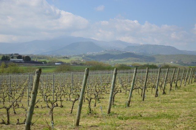 Strada del vino cesanese, Lazio