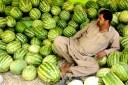 Vendedor de melones en el valle de Panjshir, Afganistán. 2011