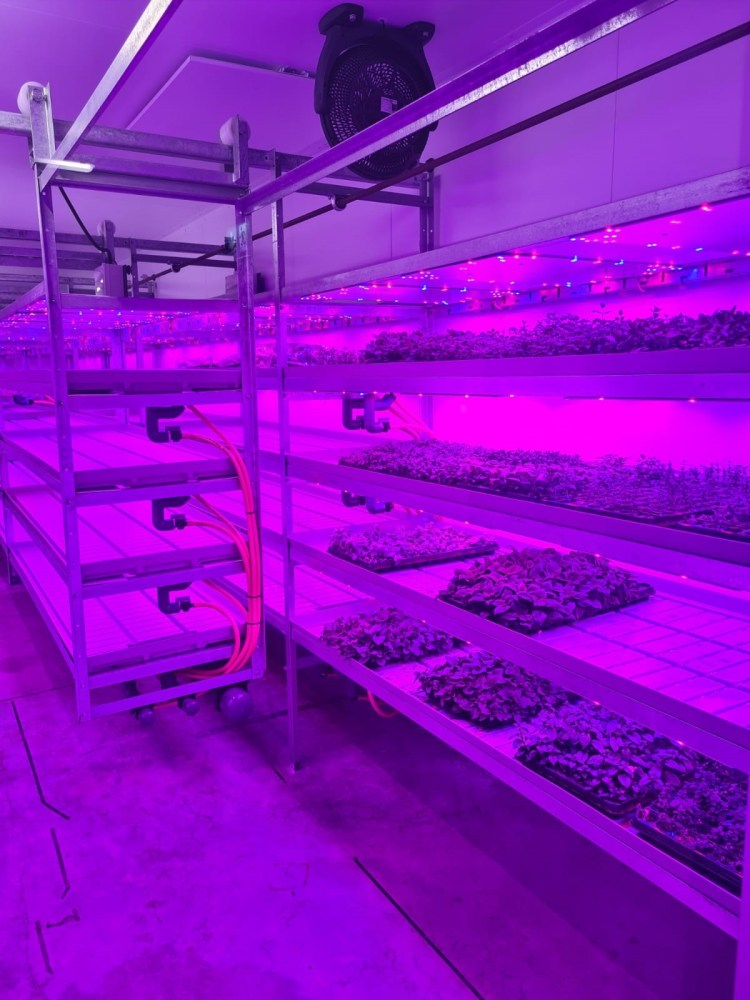 Reaseheath College Vertical Farm