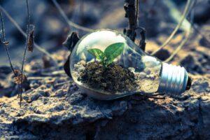 clear-light-bulb-planter-on-gray-rock-1108572