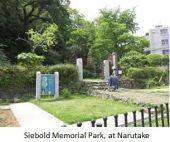Siebold- Narutaki x02.JPG