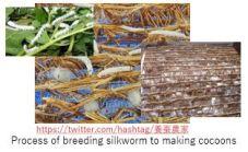 Tuat M- Silk Worm x4