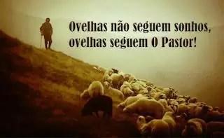 ovelhas seguem cristo