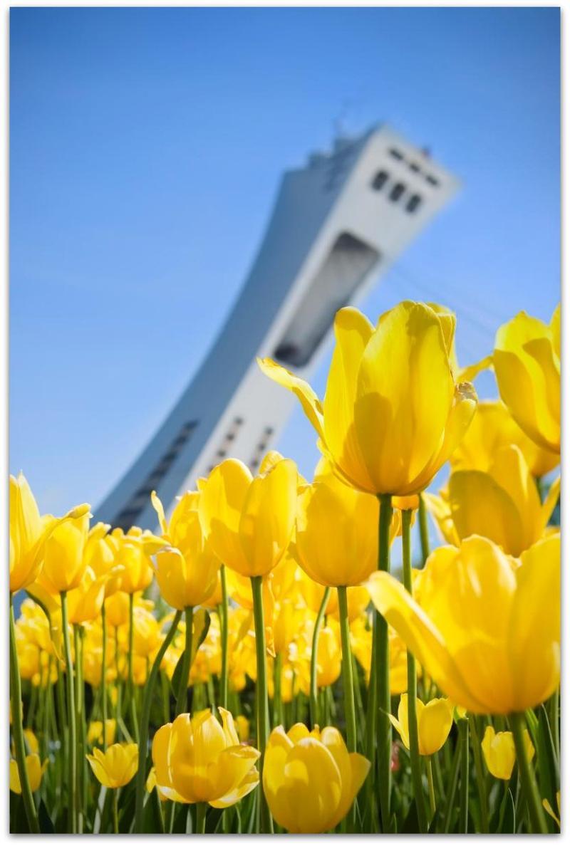 Montreal Flowers