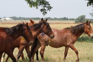 BLM Horses 2