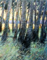 Melancon Myakka Grasslands
