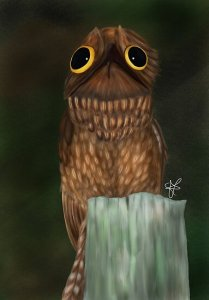 Potoo bird  Posters by Stephanie Adams   Redbubble Potoo bird by Stephanie Adams