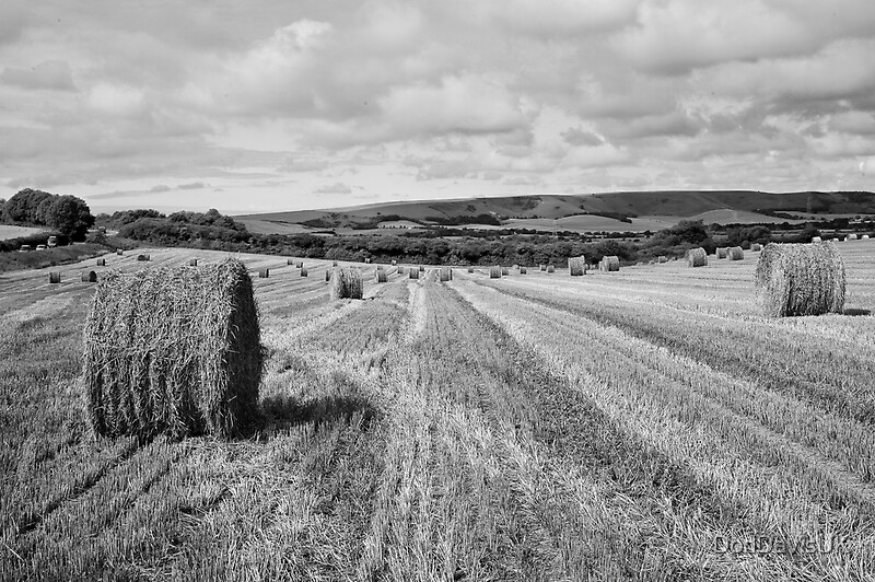 Hay Bales Black And White By DonDavisUK Redbubble