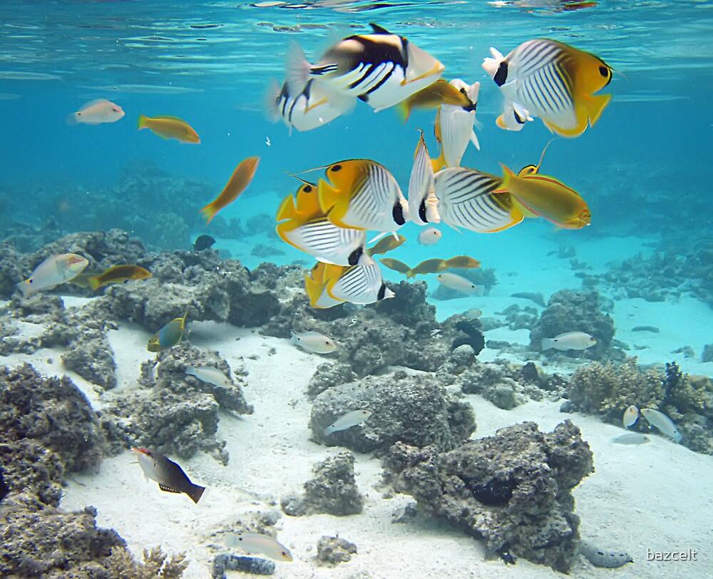 Sea Life Home Decor