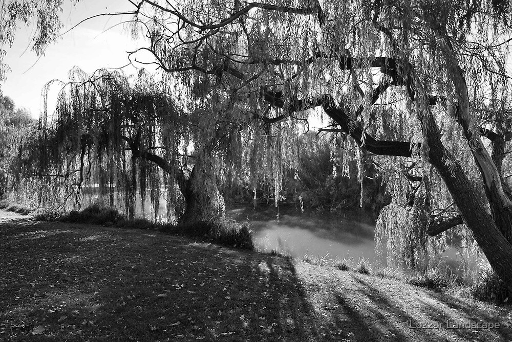 Tapestries And Wall Trees Black White