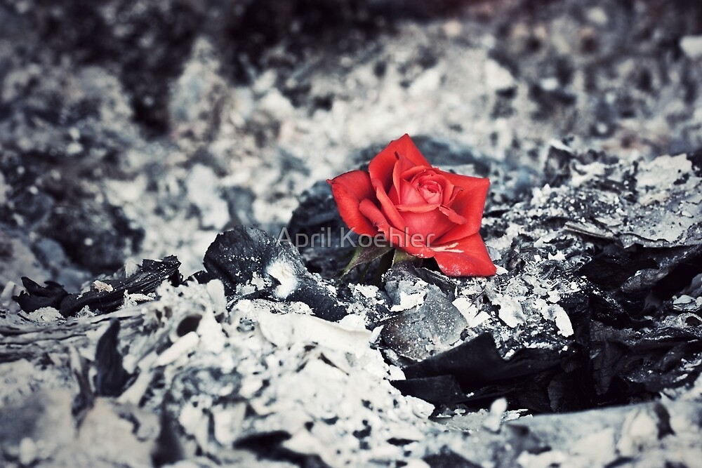 Beauty Rises From The Ashes By April Koehler Redbubble