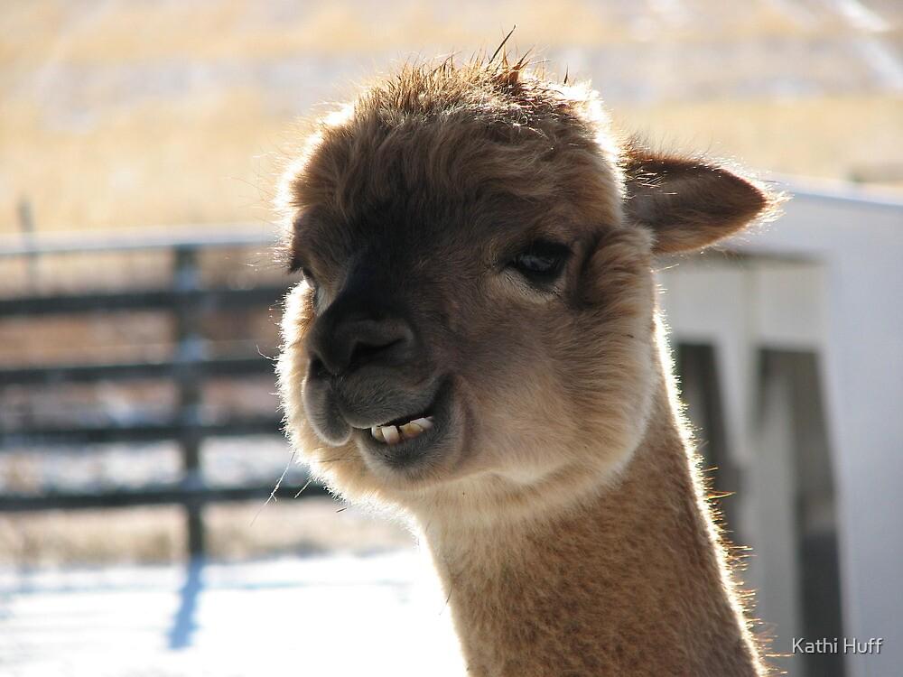 Smiling Alpaca By Kathi Huff Redbubble
