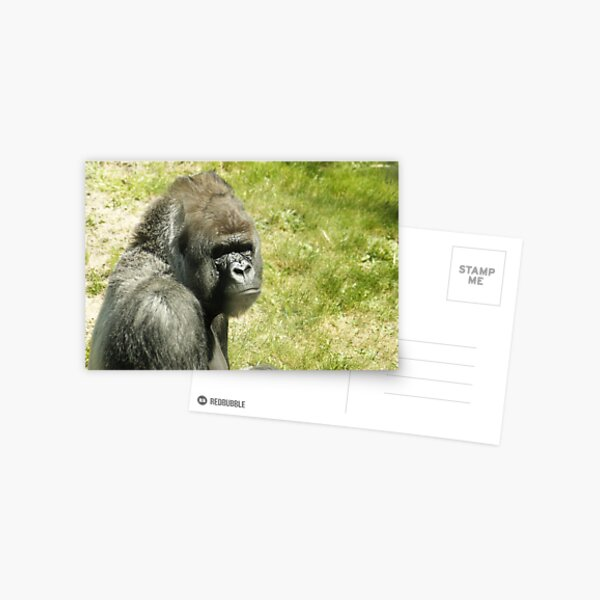 gorilla postcards redbubble