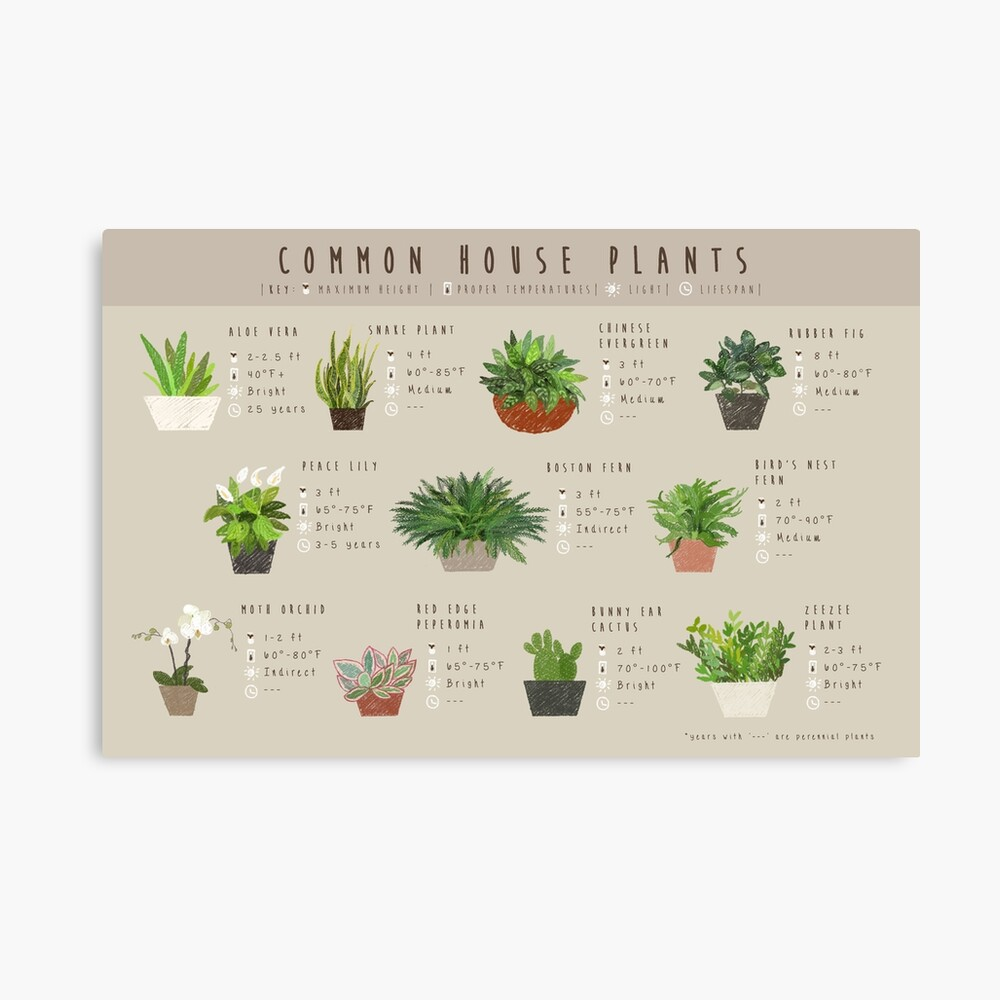 Common House Plants Infographic Art Board Print By Amakiyo Redbubble
