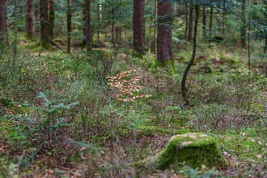 """""""Forest Natural View, Trees And Stumps With Moss"""" Posters"""