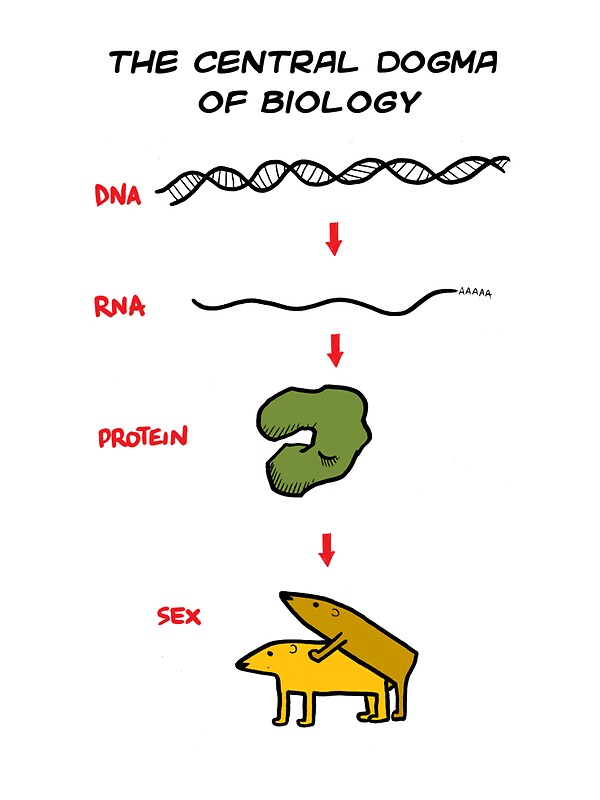 Central Dogma Of Biology Stickers By Pedro Velica