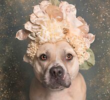 Aphrodite Pit Bull Product Items