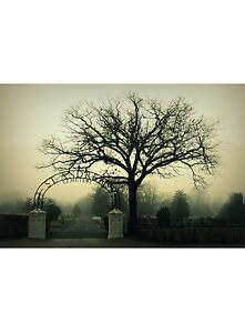 St. Andrew's Cemetary by Kristina Gale