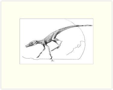 Terrestrisuchus Muscle Study