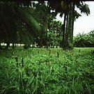 bush and grass