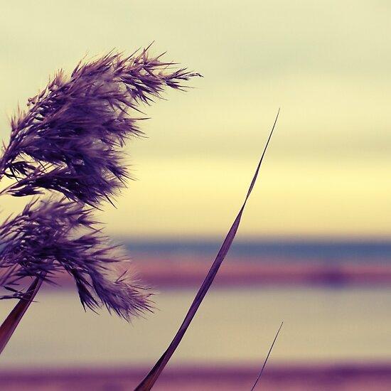 Blowin' In The Breeze