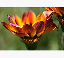 Wild Fire Photographic Print by Stephen Mitchell