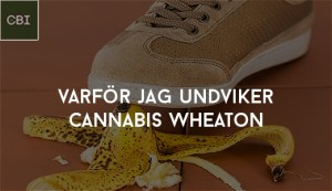 varför jag undviker cannabis wheaton