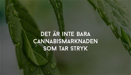 Pyntade fint med cannabis