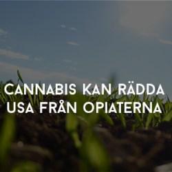 Cannabis kan rädda usa från opiaterna