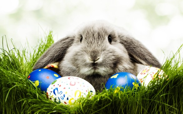 Pictures of The Easter Bunny