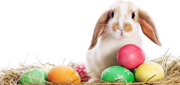 Cute Easter Bunny Photos
